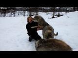 В 2008 году эта девушка вырастила волчат и через 4 года они вновь встретились в дикой природе